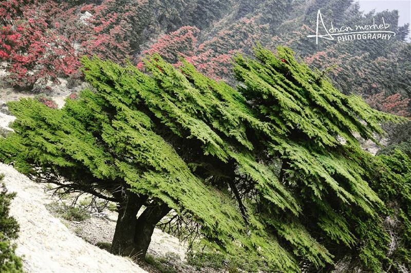 independceday Lebanon flag nature socialenvy PleaseForgiveMe sky ... (القموعة)