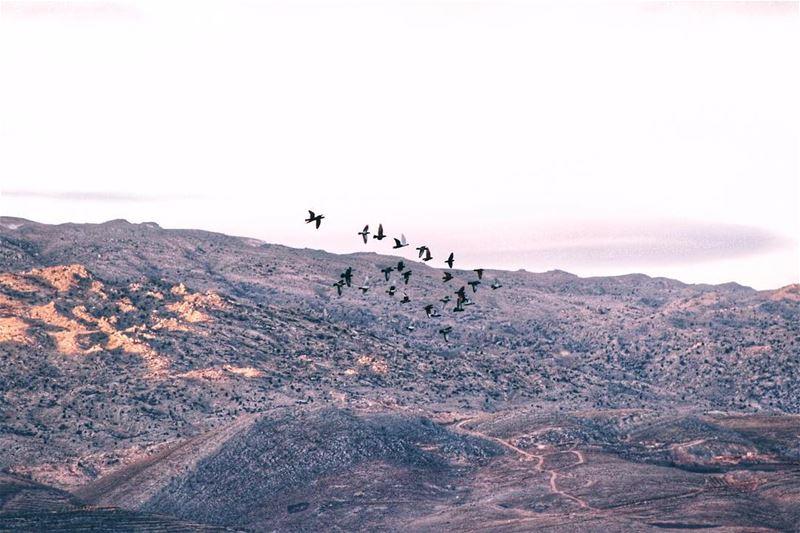 Happy Friday morning friday november bekaa lebanon fly flying ... (Barr Eliâs, Béqaa, Lebanon)