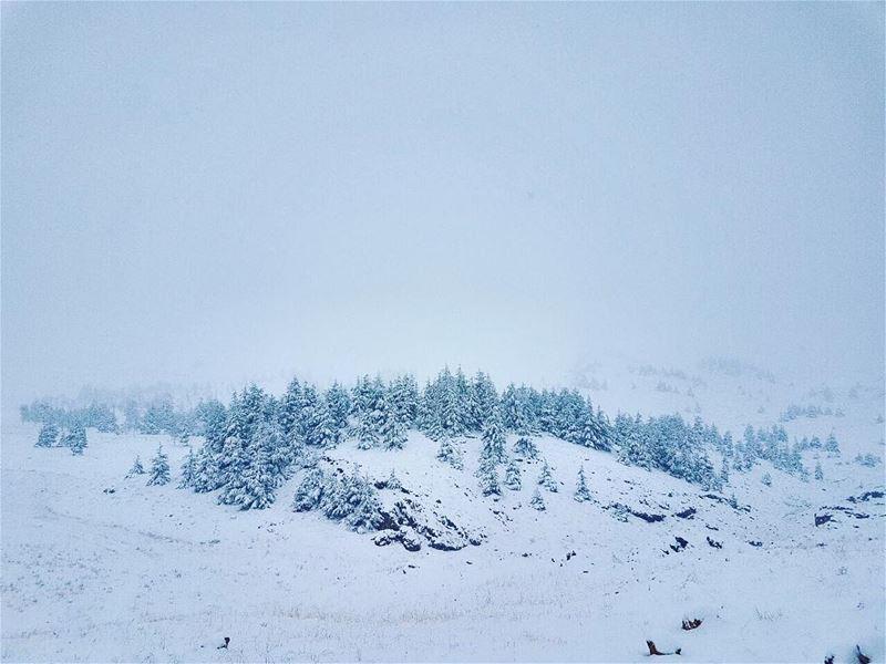 Let it Snow ❄️❄️❄️ ...... cedarsoflebanon cedarsofgod winter ... (Cedars of God)