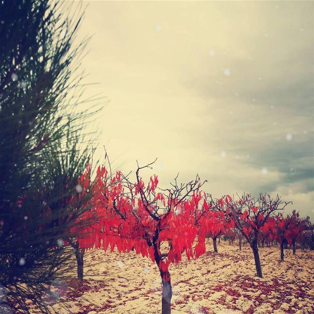 autumn autumn🍁 livelovelebanon🇱🇧❤️ lebanon brital fall peace...