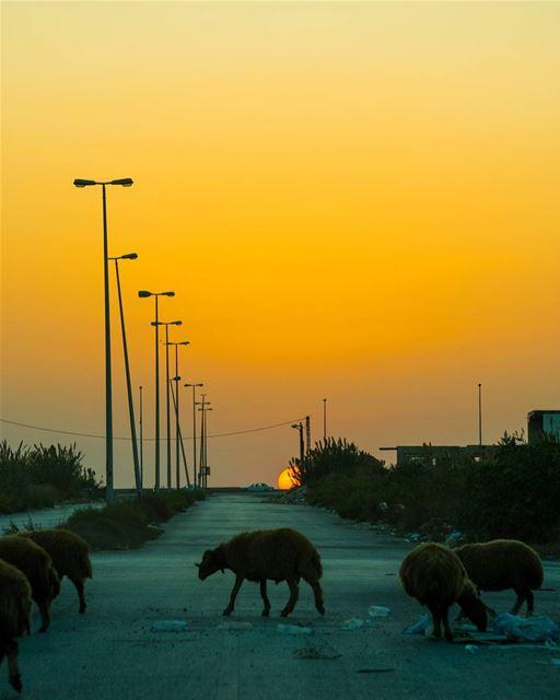 Irregularities 🐑☀️ rookietographer ...... lebanon natgeoyourshot... (Tripoli, Lebanon)