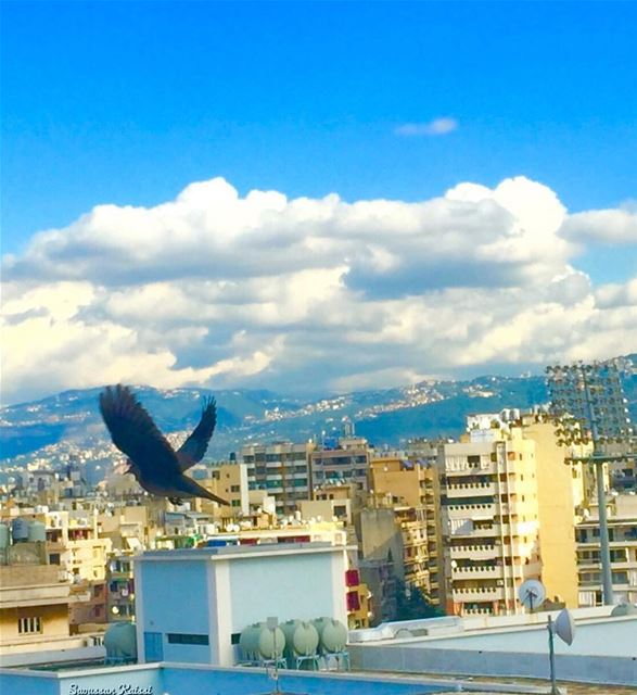 flying freedom sky clouds beirut ...