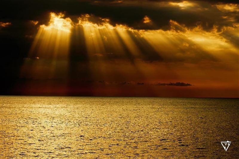 Pre sunset 🌅 wildlifephotography wildlifephotography birdphotography ...