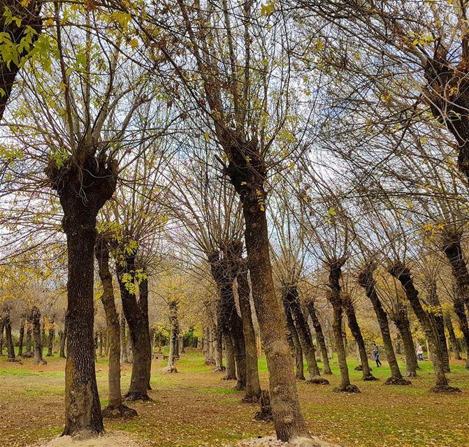 Nature is love❤❤🇱🇧🇱🇧 naturephotography naturelover colorful trees ... (Deïr Taanâyel, Béqaa, Lebanon)