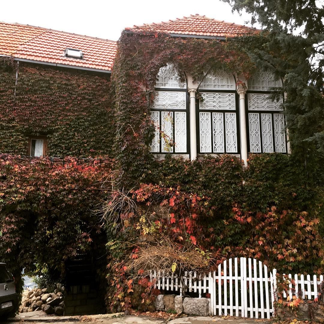 Ivy on house in autumn 🍂 kulturoscope culture scenery nature ivy ...