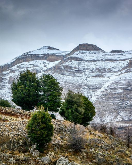 Hello winter. Beautiful snow covered mountains of Hadath El Jebbeh -... (Tannourine El Faouka)
