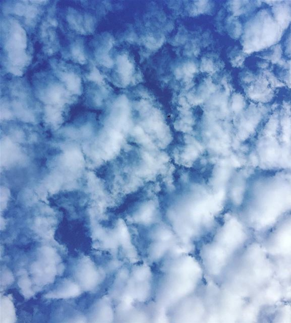 Spot the bird-- lebanon lebanonshots lebanontimes lebanonlove sky ...