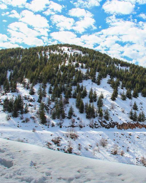 Impossível não se encantar com esta reserva de cedros nas montanhas de... (Bâroûk, Mont-Liban, Lebanon)