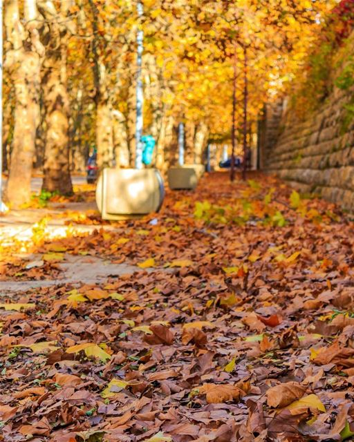 fall autumn nature lebanon Sawfar loves_lebanon super_lebanon lebanon_hdr... (Sawfar, Mont-Liban, Lebanon)