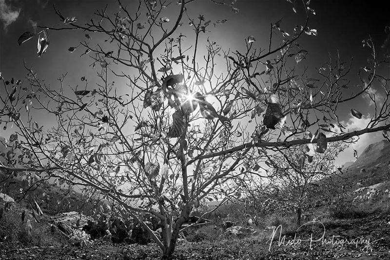 autumn laklouk lebanon midophotography ig_mood ig_refined ...
