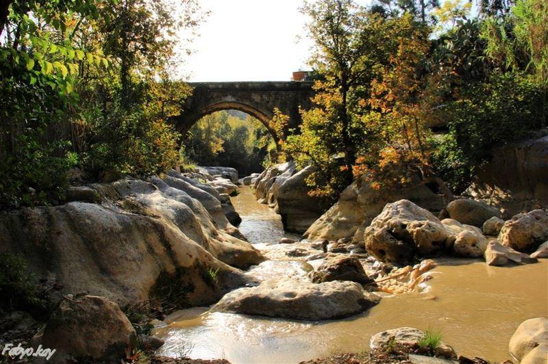 =============================== libano nature naturelovers trees water... (Chouf)