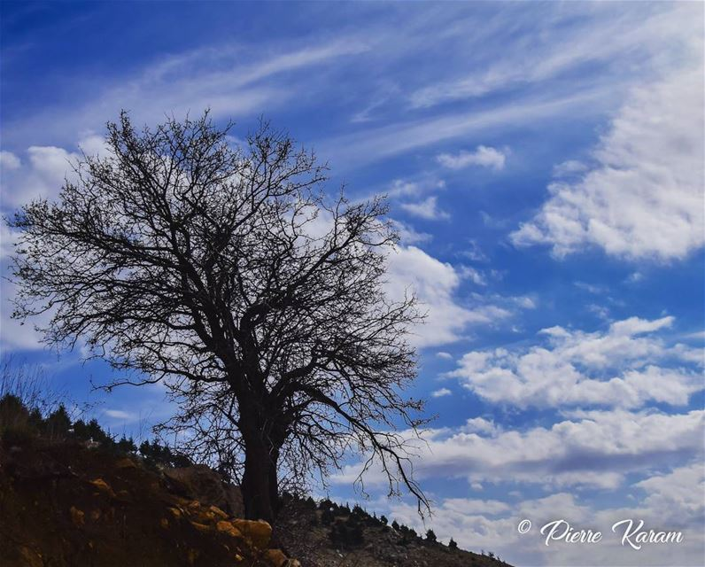 the season is changing old tree cloudy sky snowy mountain ... (Falougha, Mont-Liban, Lebanon)