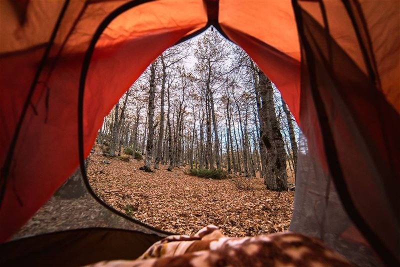 Home is where you pitch your tent🍁🍂.... autumn camping paradise...