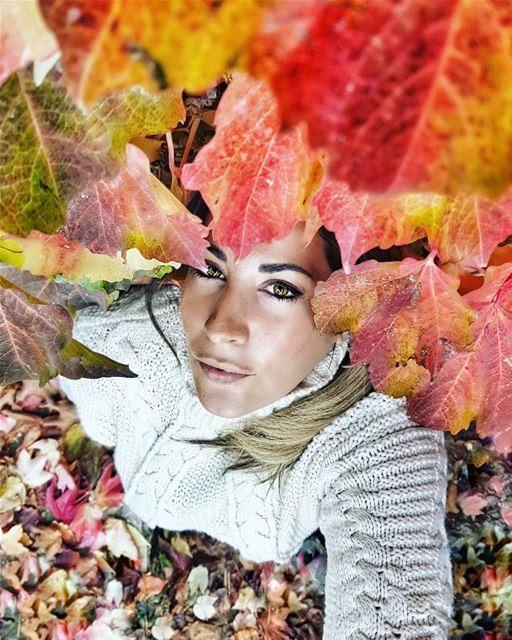 Snuggled in my leafy wall of love... Autumn if I could hug you, I would...... (Lebanon)