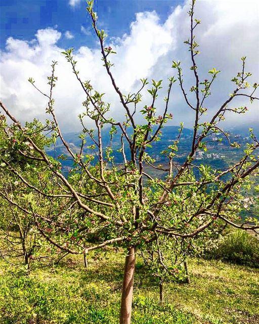 📷🇱🇧⛰🌿🍃🌿🍃⛰ 🇱🇧📷 April, 2017 nature naturephotography history... (Bcharré, Liban-Nord, Lebanon)