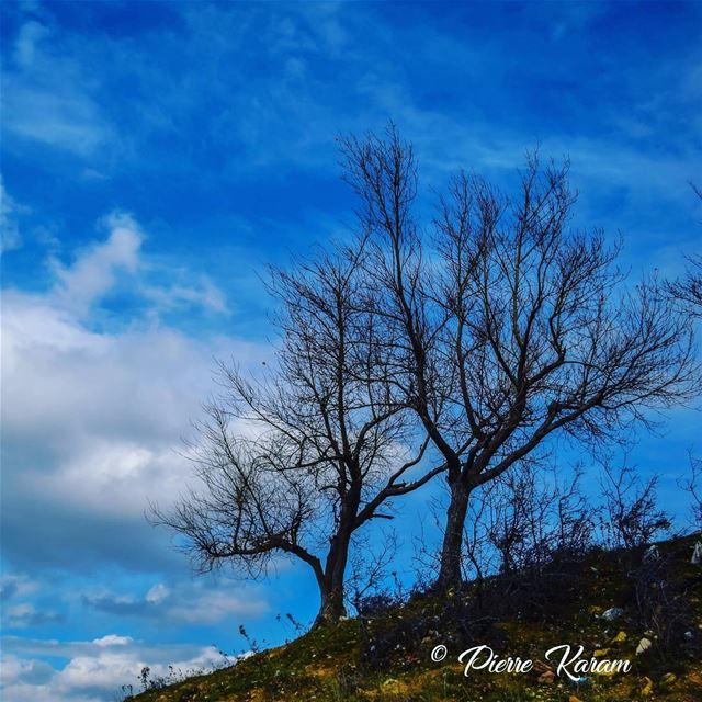 couples goal winter season old tree cloudy sky snowy mountain... (Falougha, Mont-Liban, Lebanon)