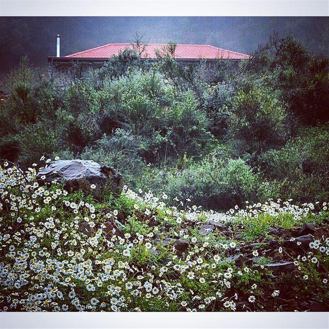 Spring in autumn. smile nature naturewalk autumn🍁 architecture ... (Nahr Adh Dhahab, Mont-Liban, Lebanon)