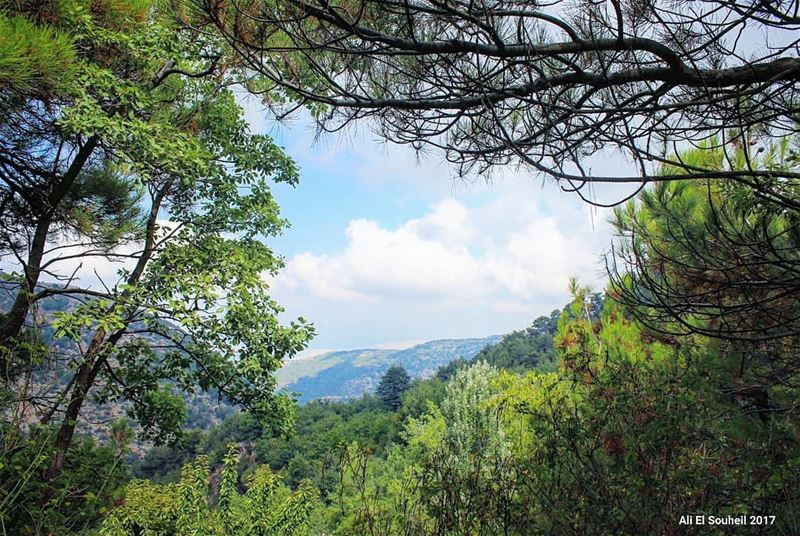 tb ehden northlebanon forest trees sky clouds lebanon colorful ... (Ehden, Lebanon)
