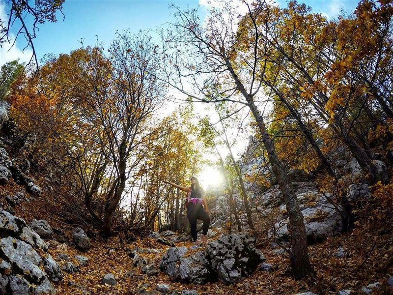 Credit to @marc_cherfan_369) Autumn Hike Forest JabalMoussa Lebanon...