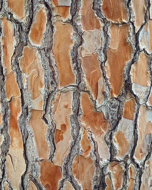 The greatest designers always exist in nature. bark tree trunk design ...