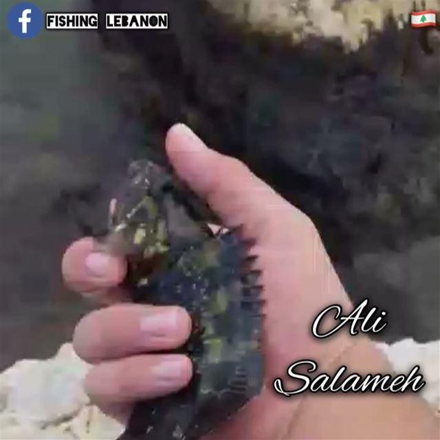 @alisalamah & @fishinglebanon - @instagramfishing @jiggingworld @whatsupleb (Beirut, Lebanon)