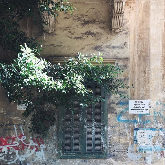 ☀️صباح الخير بيروت 🌻🌿 (Beirut, Lebanon)