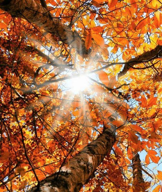 New sunrise New day Happy Friday everyone 🌞🍂.. taanayel bekaa ... (Taanayel- Bekaa)