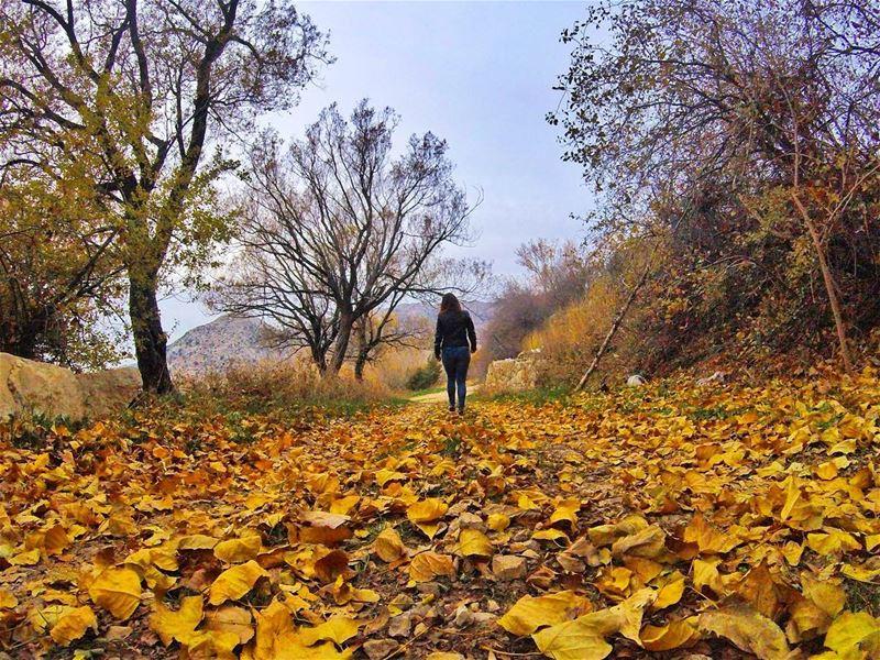 Wanderlust vibes. livelovebeirut livelovelebanon woods autumn ...
