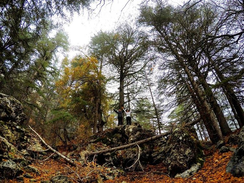 GirlsWhoHike HikerGirl Hike Adventure Mist Forest HorshEhden Ehden... (Horsh Ehden)