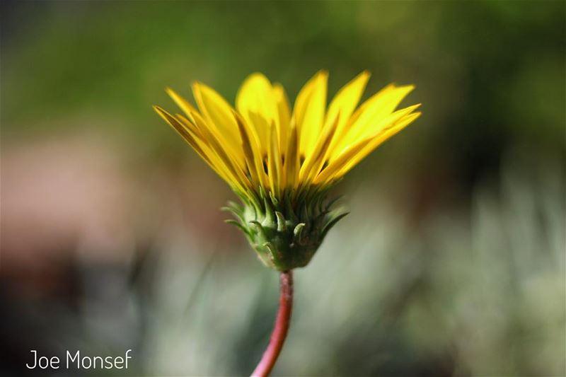 green flower flowerstagram flowerlebanon lebanon flowers nature ...