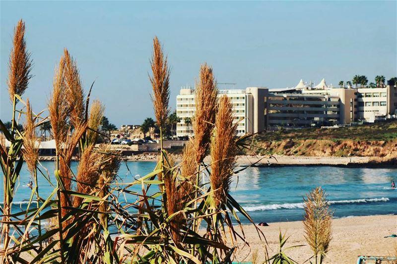 🌾🌊•••• sunny beachlife sea seaside seaview sealovers beach... (Ramlat Al Bayda', Beyrouth, Lebanon)