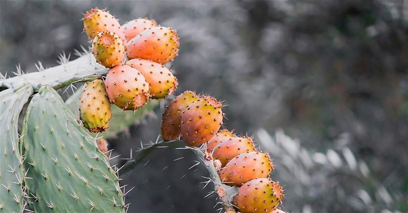 🌵🍊  cactus  colorsofnature  colors  fruits  lebanesefruits ...