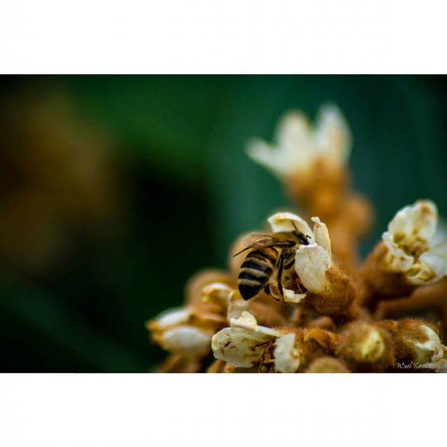 nature  flower  bee  honeybee  tree  honeybees  insectlife  natureshots ...