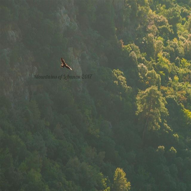 "From yesterday's ""Wild life"" one (local) majestic eagle flying in the..."