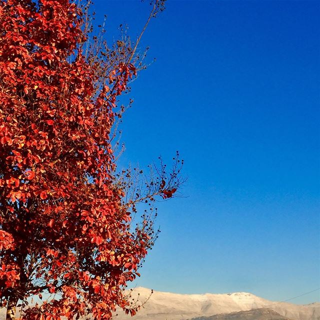 Red leaves of Fall and the unmistakable Mount Sannine in the back with the... (Qleyaat)