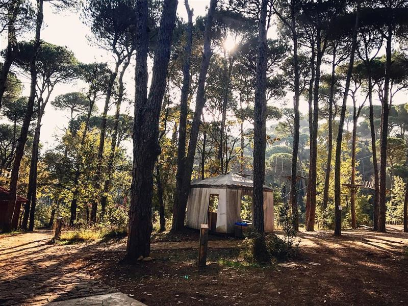 On the wild side 🌳🏕🌳 LaMaisonDeLaForet TheWildSide Escape Forest ...