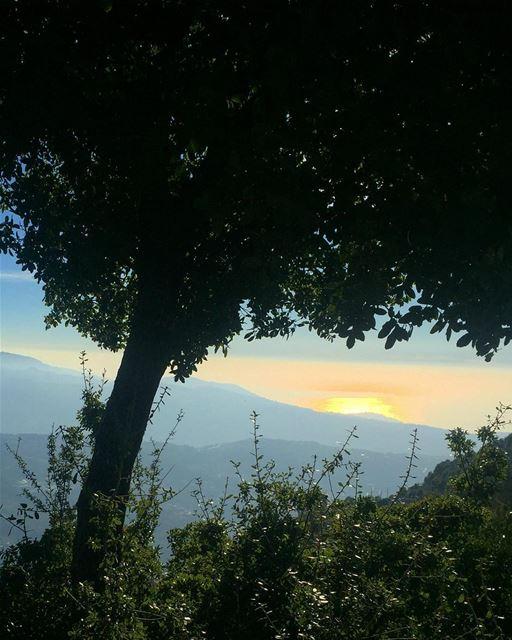 Good morning beautiful peeps 😘🌳...... morning picoftheday ... (Lebanon)