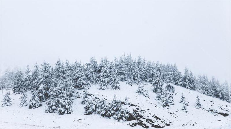 Ice Dragon lair ❄️ 🐉 -- landscape snow cedras... (Lebanon)