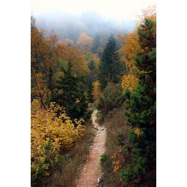 ehden ehdenreserve autumn colors road natureroad trees ...