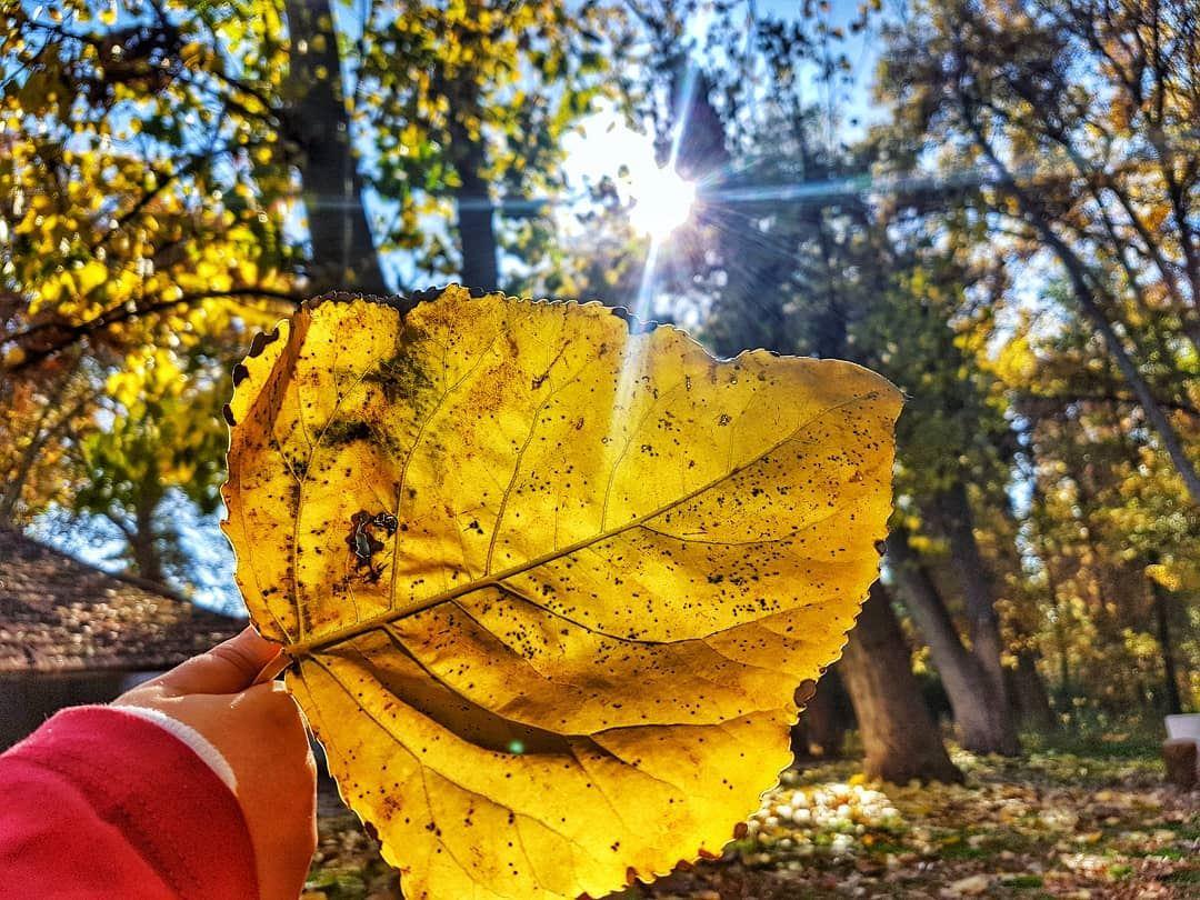 Look around...every falling leaf is a blessing 🍂 littlehands Chosen... (Deïr Taanâyel, Béqaa, Lebanon)