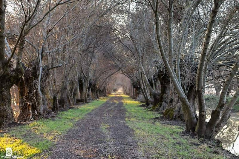 inthemiddleofnowhere asfarastheeyecansee trees treeroad nature... (`Ammiq, Béqaa, Lebanon)