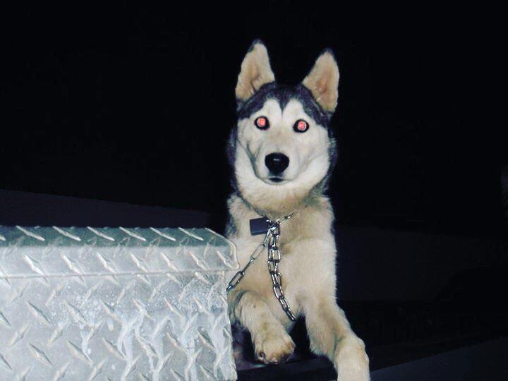 lebanon saidoun dogs usadogs usa egypt cypruslimassol cyprus dubai...