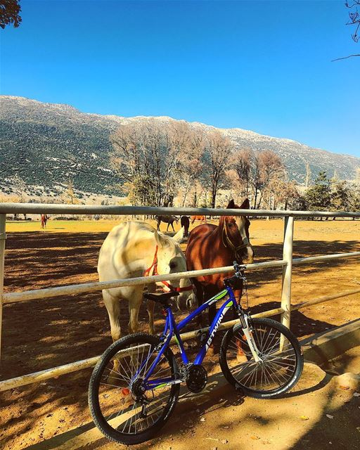 •Friends• 🐎🚲 horses bike ride break nature outdoor farm bluesky ... (`Ammiq, Béqaa, Lebanon)