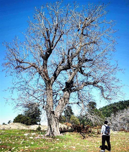 Hiking Nature NudeTree Akkar Lebanon wildernessculture ... (`Akkar, Liban-Nord, Lebanon)