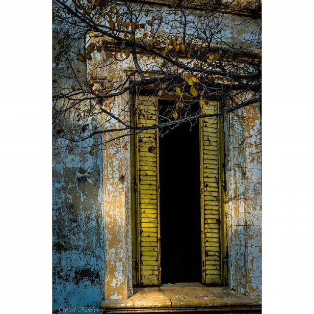 window  autumn  yellow  leaves  tree  branch  lebanon  heritage  old ... (Donna Maria Sursock Gardens)