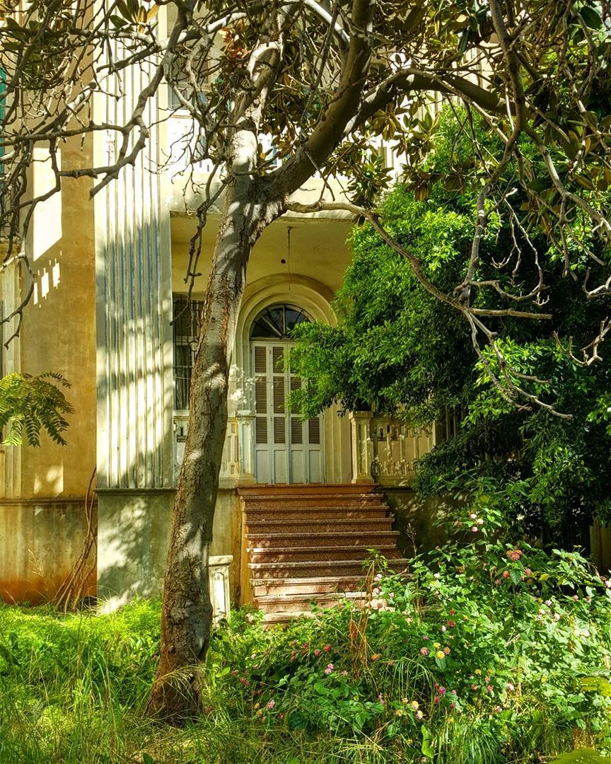Beirut's urban jungle is one of my favorite aspects to explore and observe,