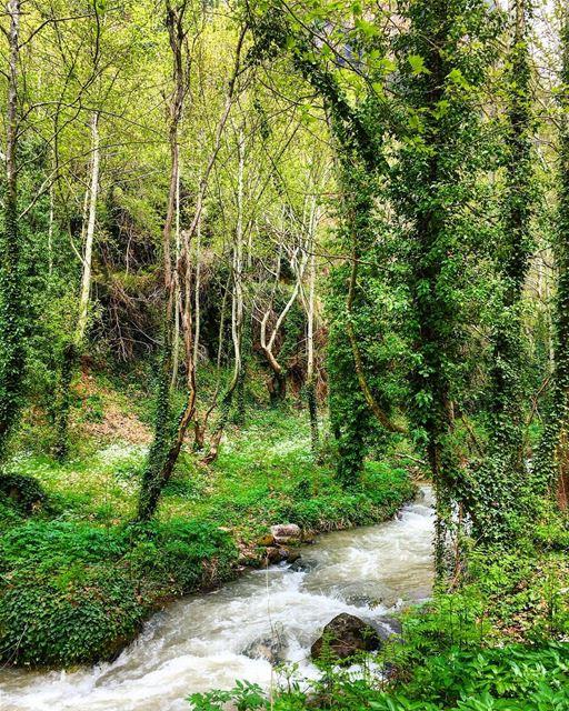 🇱🇧⛰🌿🍃🌿🍃⛰ 🇱🇧 nature naturephotography history family trip vacation... (Wadi Qannubin, Liban-Nord, Lebanon)