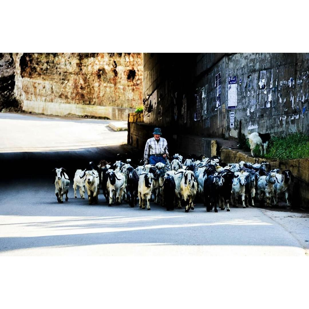 © Milad lamaa | shepherd miladlamaaphotography photgraphs photograph ...