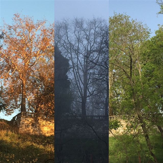 (Almost) same frame different seasons from golden fall colors to winter... (Rayfun, Mont-Liban, Lebanon)