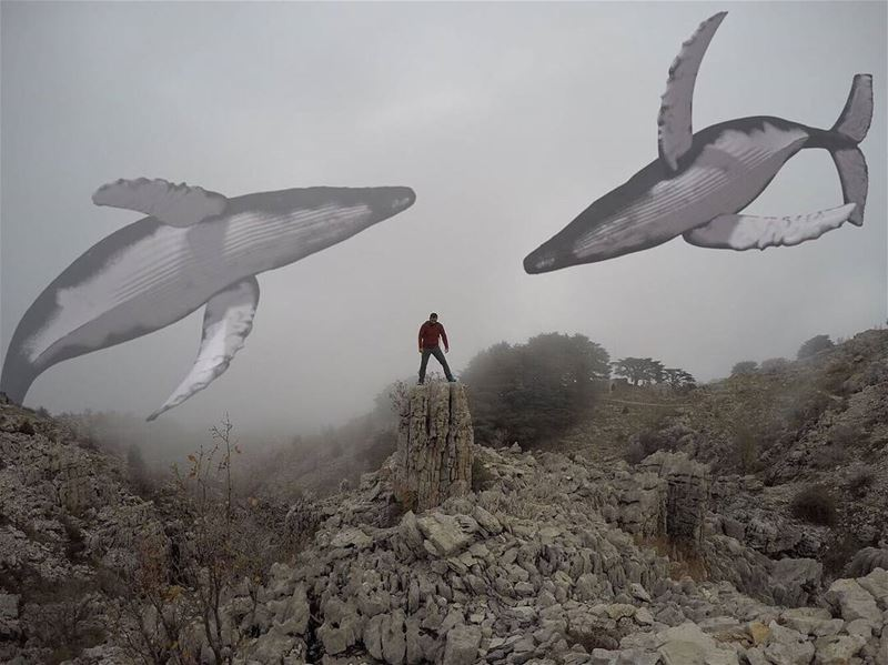 The mountain whales dancing freely in the fog 😍 Thank you for the... (Arz Jaj)